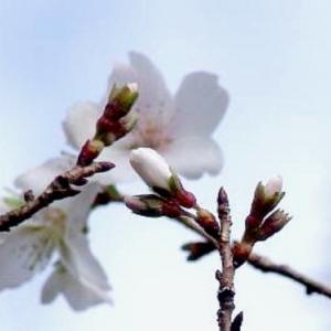 四季桜と月桂樹✽秋色スープ・ミネストローネ