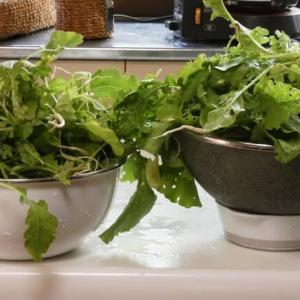大根の間引き菜。
