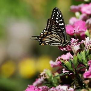 今日は、庭の蝶と蜂の写真を
