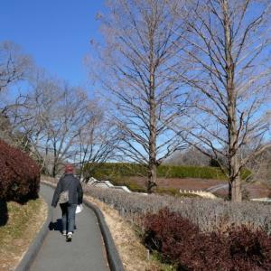 昨日妻と、武蔵丘陵森林公園の散策を楽しんだ
