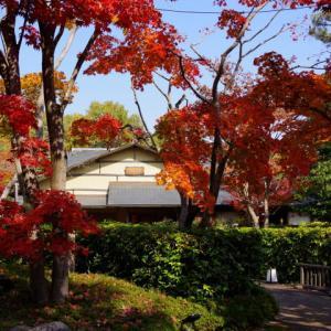 昨日、妻と紅葉で賑わう昭和記念公園を散策した