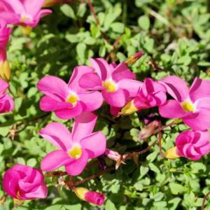 庭の花を撮って遊んだ
