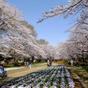 昨日、妻と近所の公園(城山、北本桜堤)で花を楽しんだ