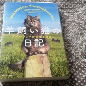 羊飼い猫の日記