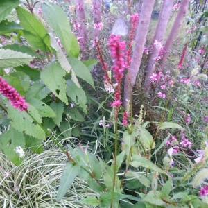 ガーデナーに良い一日でした。~夏の花を整理しました。