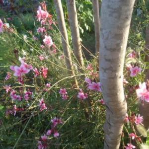 今朝の庭~ベストスコア!