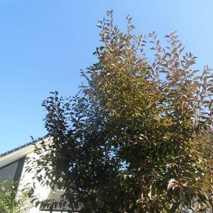 快晴~オリーブの木