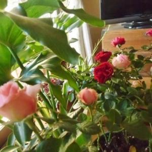 花も葉もピカピカです~~~(^^♪