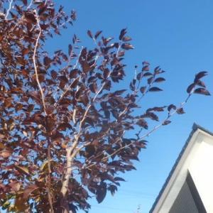 シンボルツリーが真っ青の空に