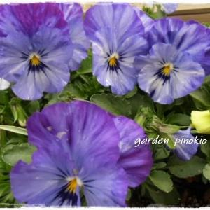 大好きなブルーの花に囲まれて