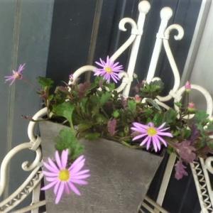 玄関前の花たちと白いダリア