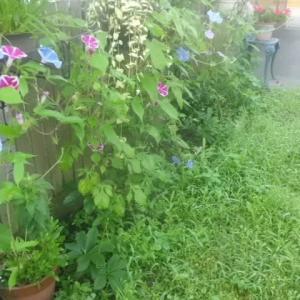 今朝の庭から~