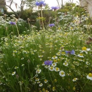 ハーブの香りで春の庭が~