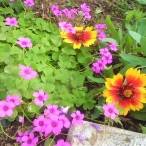 メルカリで花種を~新米届きました