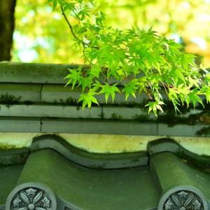 色づくまでもう少しだった金戒光明寺・真如堂