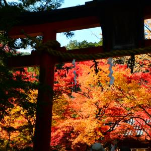 真っ赤に燃ゆる鍬山神社の紅葉