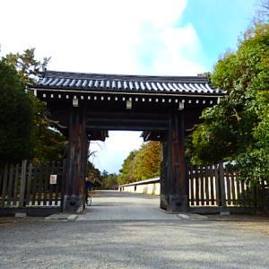 京都御苑の蝋梅