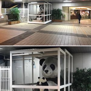 上野駅の親子ジャイアントパンダを知っていますか?