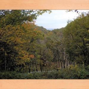 2018年11月18日 滝山城跡景観回復作業「滑るから気を付けてね!」