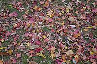 紅葉の「石空川渓谷」を歩く 日本滝100選「精進ヶ滝」