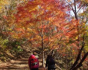 紅葉台から山梨百名山「足和田山」に登る