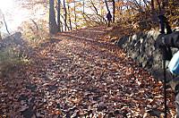 落葉の絨毯を歩く 湯村山と八王子山
