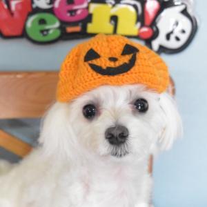 ハロウィン かぼちゃ帽子