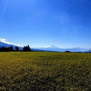 【富士山絶景】稲穂も実り収穫まじかです@山梨県北杜市大泉町