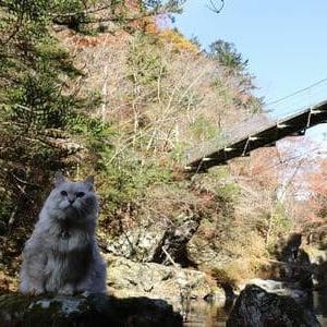 小田深山渓谷 紅葉No2