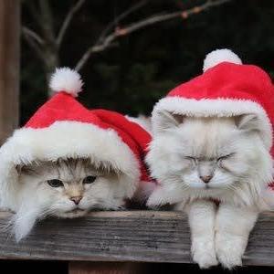 クリスマス服で双子コーデ