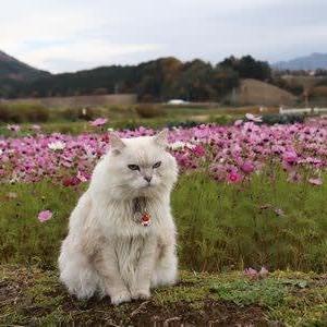 秋桜とウルツリー