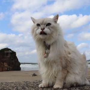 稲佐の浜 日本海の風になびく毛