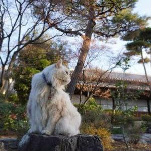 背景が日本庭園