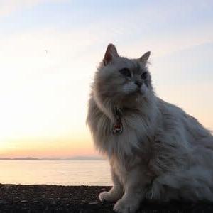 夕日タイム 空がきれい