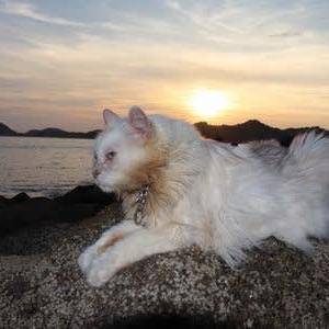 日没 夕焼け色の海