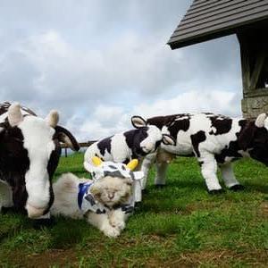 ぬいぐるみ牛さんと一緒にカシャ