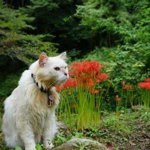 彼岸花が咲いてるか下見に行ってきました
