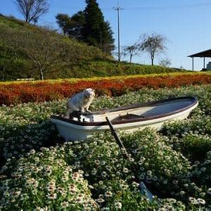 花の中に浮かぶ舟