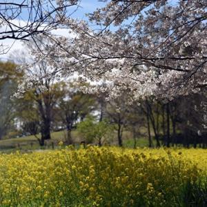 【春・花の競演】