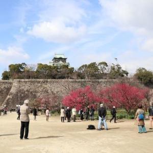 メジロを撮影に大阪城梅林公園へ