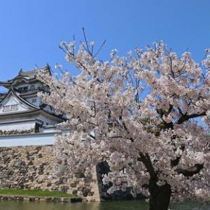 岸和田城周辺へ散歩に