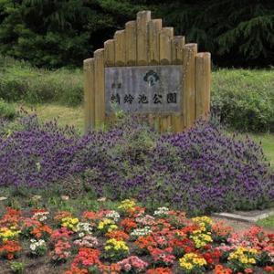 蜻蛉池公園のバラ園へ