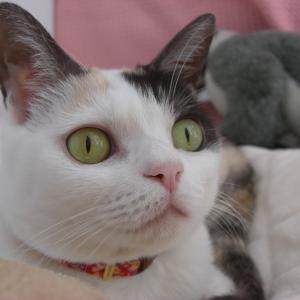猫の日は365日