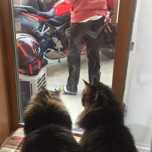 猫ちゃんを飼う事の驕り