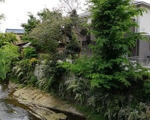 5月8日は鎌倉へ/若き清方と仲間たち(鏑木清方記念美術館)