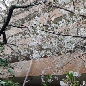3月28日。土曜日!!雨!あめ~~