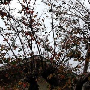 10月15日。木曜日!!曇りからの雨??