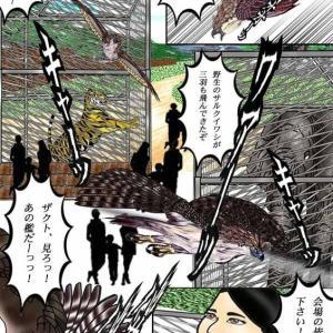 213章 ウワーッ、野生のサルクイワシが3羽も飛んできたぞ!!