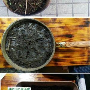 土を煮沸しました