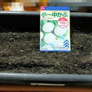 カブの種をプランターに蒔きました